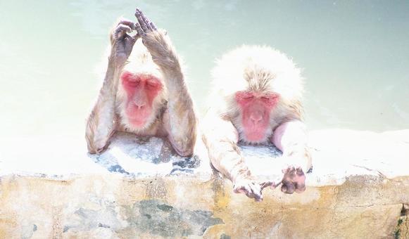 Bath of monkey
