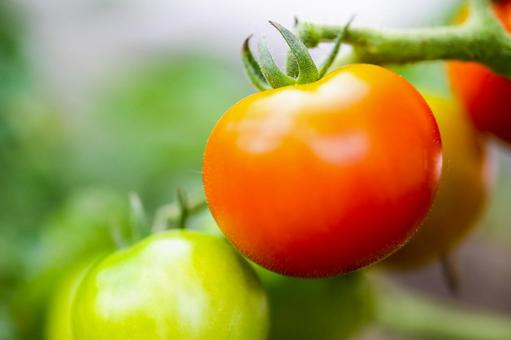 Tomatoes · Fresh vegetables