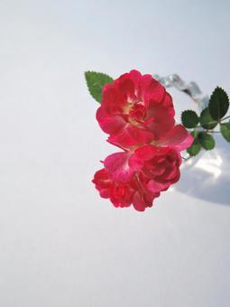 미니 장미 꽃병 화이트 백 1