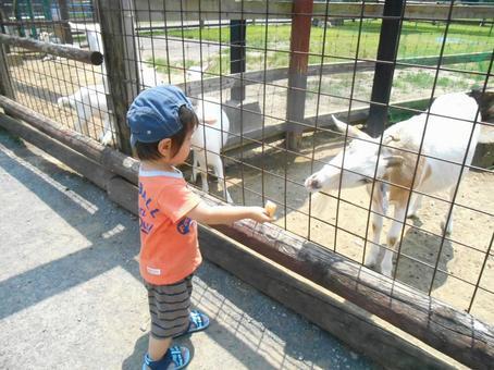 A child feeding a goat