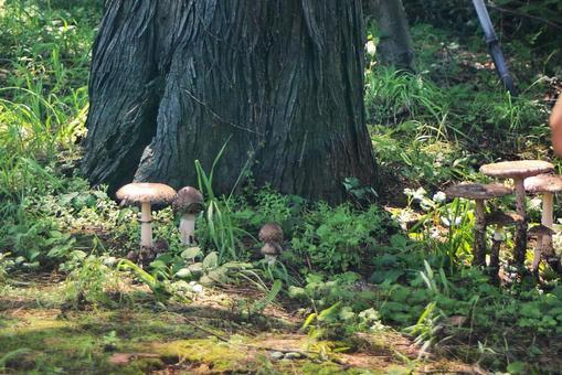 버섯의 수풀