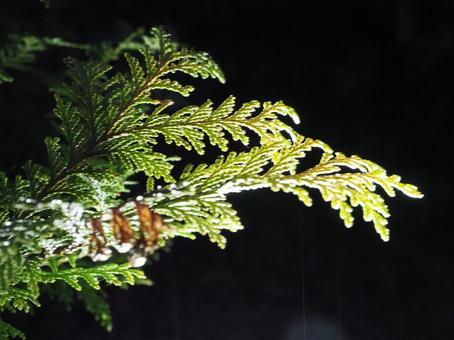 밤의 식물