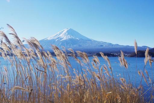 Susuki and Mt. Fuji