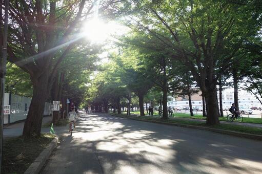 Hokkaido University 4