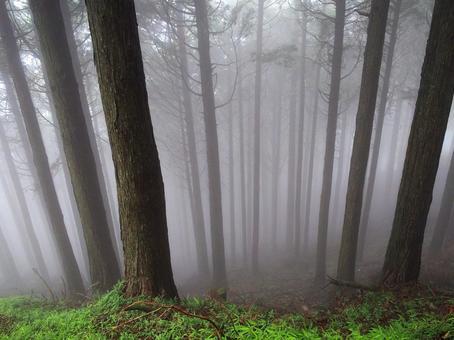 희미하게 보이는 숲