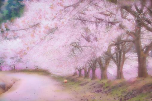 Row of cherry blossom trees 1