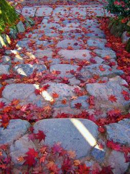 Stone steps and fall foliage