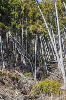 台風一過の林2
