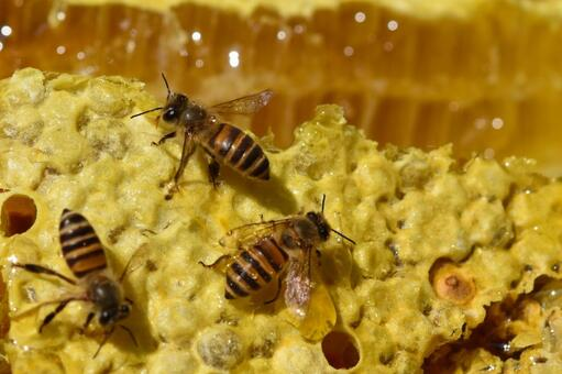 World of nest honey and bees Immunity Close-up Material Background