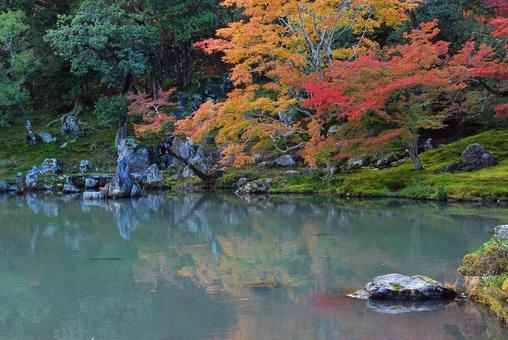 秋葉反映在一個池塘里