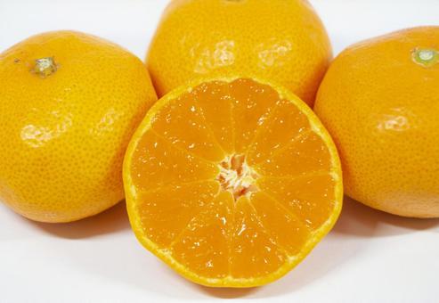 越冬成熟的Mikkabi橘子平靜Mika Ace