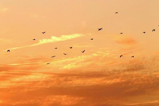 Crow returning twilight
