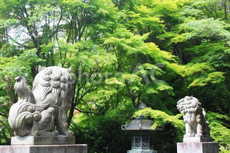 新緑の金蔵寺の写真