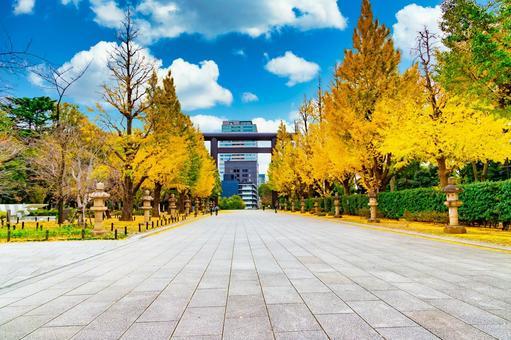 Ginkgo trees at Yasukuni Shrine