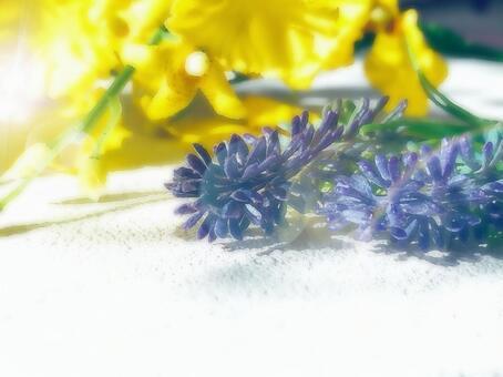 Yellow and purple flowers spring color background