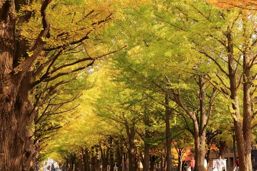 Autumn leaves and ginkgo bunches 2