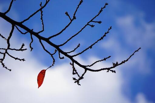 나뭇 가지에 마지막 남은 한 장의 잎