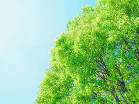 空と緑。01