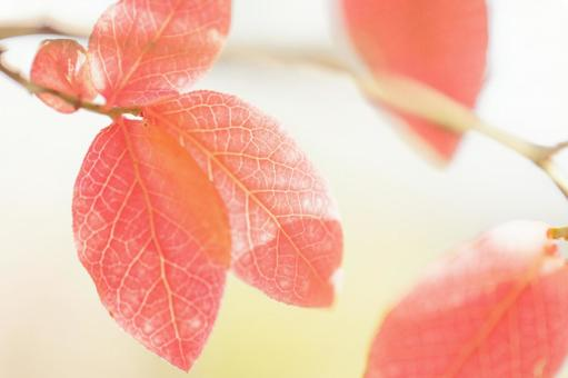秋天樹葉的顏色