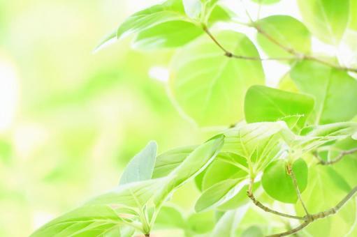 Natural frame of leaves