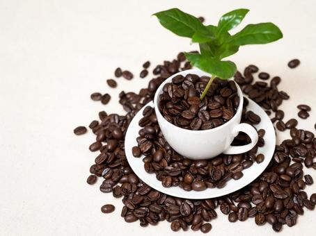 커피 나무 13