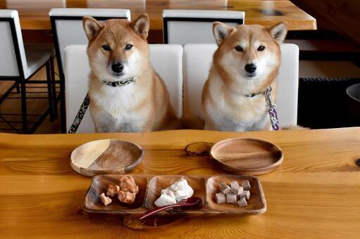 Shiba Inu, waiting for rice