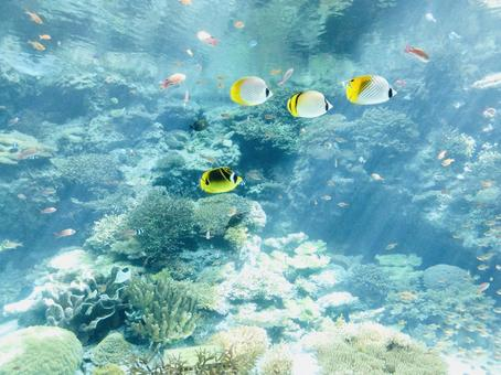 Snorkeling in the transparent sea of Okinawa