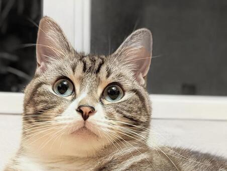 고양이 고양이 고양이 고양이 업 고양이 얼굴