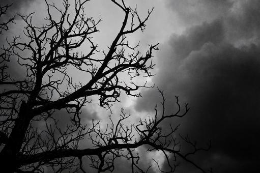 어둠의 나무