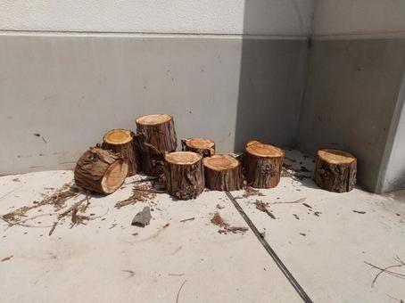 벌채 된 노송 나무 줄기