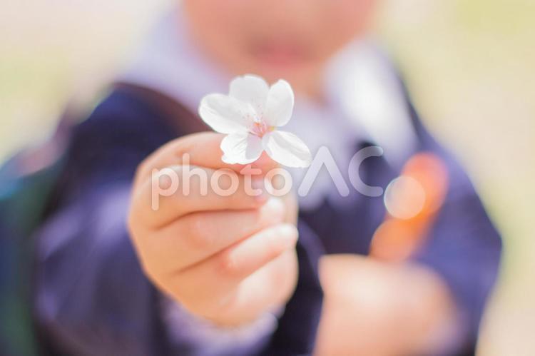 桜の出逢いの写真