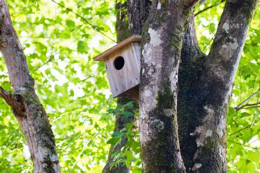 A bird's nesting box in the forest