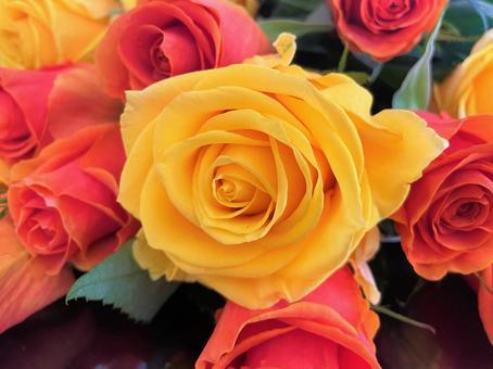 장미 꽃다발 2