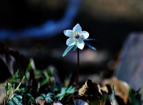 봄을 알리는 꽃