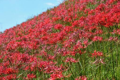 피안 꽃 수풀