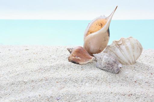 해변 조개 31