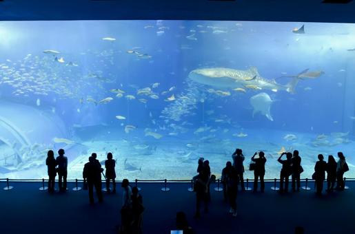 At Churaumi Aquarium 38