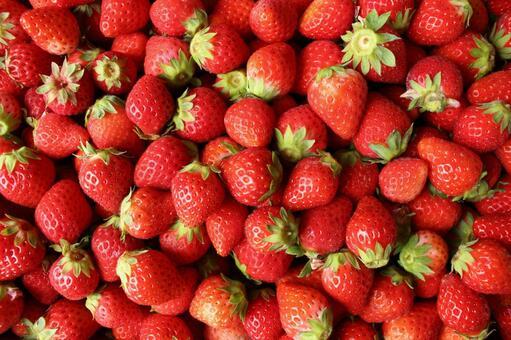 딸기 딸기 딸기