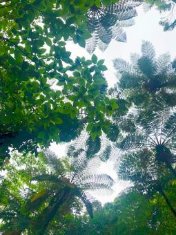 Kinsaku Primitive Forest
