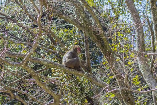 日本猴子在山上1