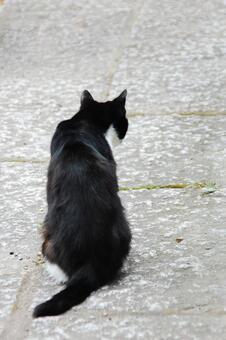 Cat black cat behind the stray cat