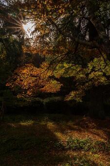 Maple autumn leaves autumn
