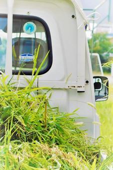 Grassy light truck