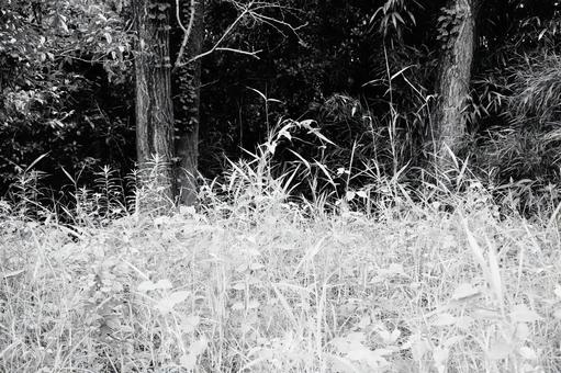 Grass and forest monochrome
