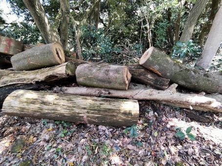 풍경 벌채 된 목재