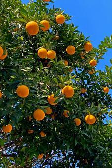 달콤한 여름 나무