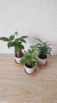 Mini houseplant