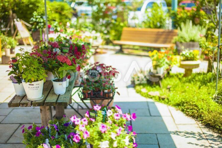 花屋の風景1の写真