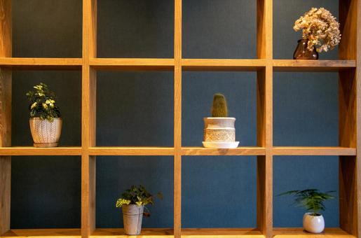 Fashionable interior foliage plants succulents