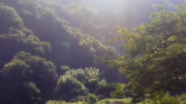 Countryside forest and sunlight 02